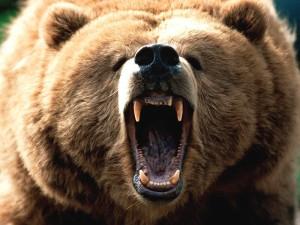 Affrontare un orso